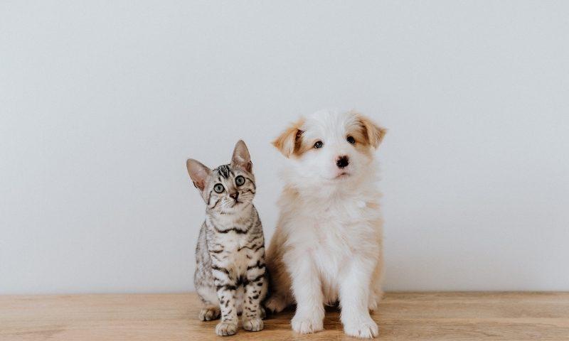 寵物貓狗洗牙
