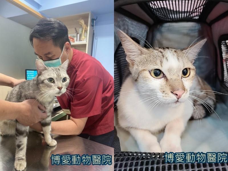 貓咪常見的非傳染性疾病