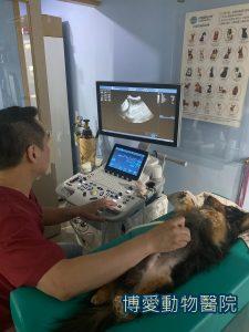 狗狗急性胰臟治療方式