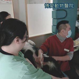 狗狗膀胱癌